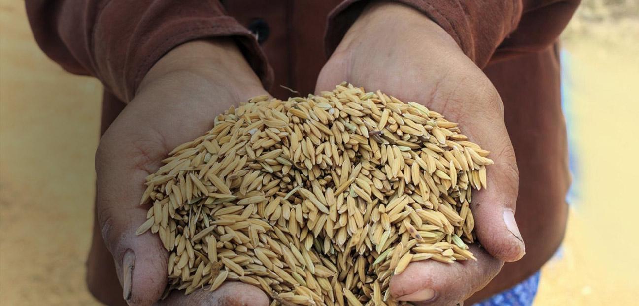 共同应对全球水源粮食危机
