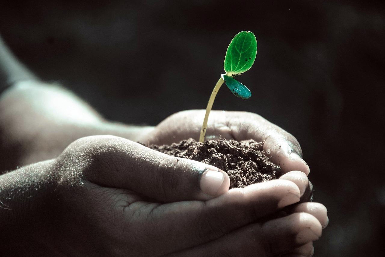 #WorldSoilDay2019: Stop soil erosion, Save our future