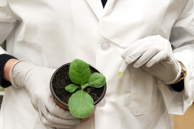 Addressing the global food challenge with nitrogen-fixing crops