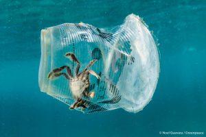 Crab in plastic