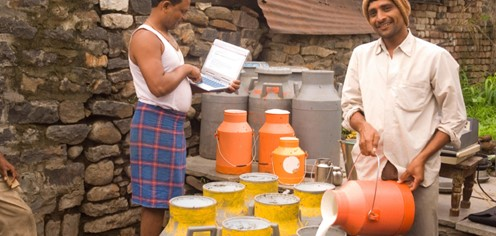 Cow milk production in India